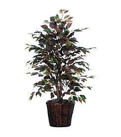 Vickerman 4' Mystic Ficus