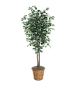 Vickerman 6' Deluxe Variegated Ficus in Dark Brown Rattan Basket