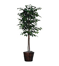 Vickerman 6' Ficus Tree Dark Brown Rattan Basket