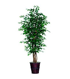 Vickerman 6' Ficus in Dark Brown Rattan Basket