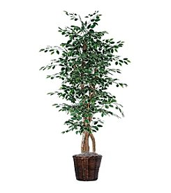 Vickerman 6' Variegated Ficus in Dark Brown Rattan  Basket
