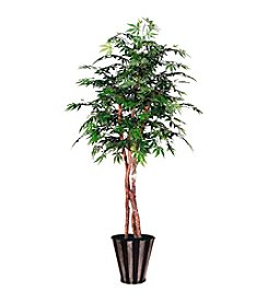 Vickerman Japanese Maple Tree