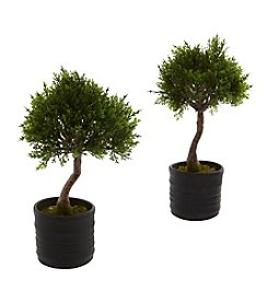 Nearly Natural® Set of Two Cedar Bonsai with Planter