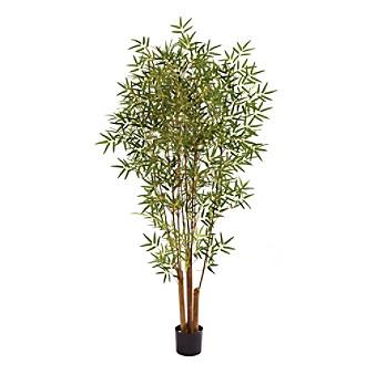 japanese bamboo tree