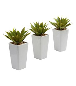 Nearly Natural® Set of Three Mini Agave with Planter
