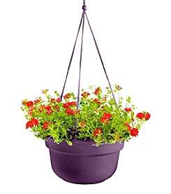Bloem Dura Cotta Hanging Basket