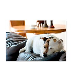 Trademark Fine Art Jack Russell Canvas Art
