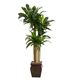 Nearly Natural® 4.5' Cornstalk Dracaena with Vase