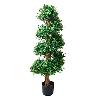 indoor romano boxwood spiral topiary