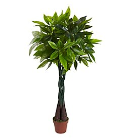 Nearly Natural® Money Plant