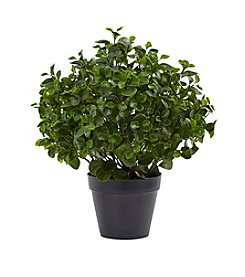 Nearly Natural® UV Resistant Peperomia Plant