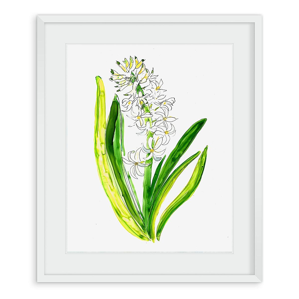 Hyacinth #1