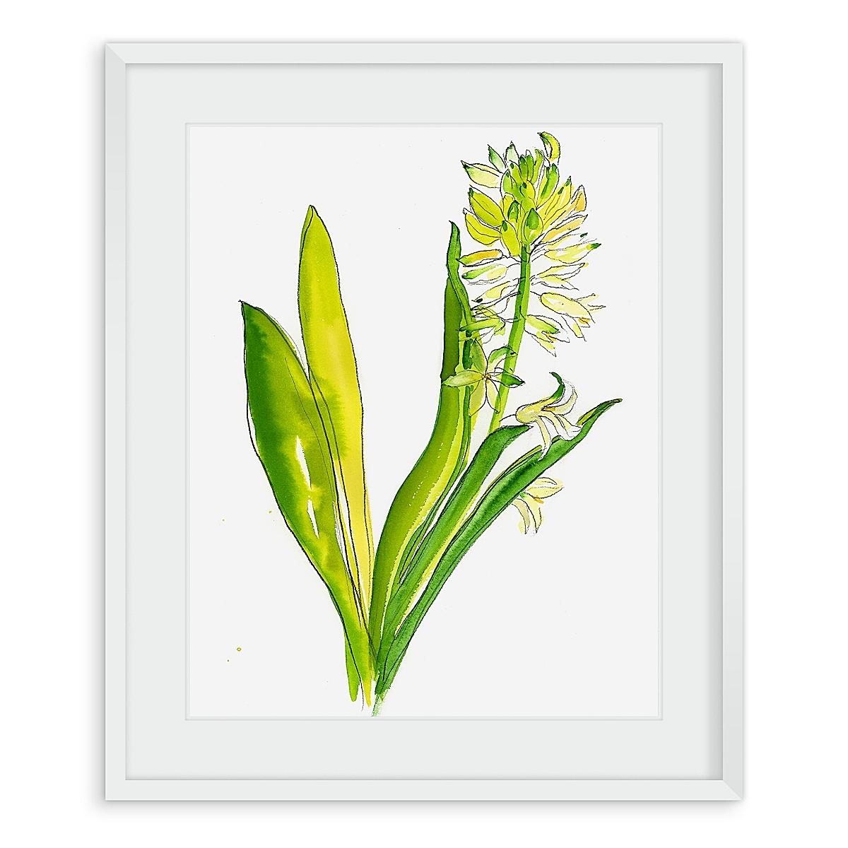 Hyacinth #2