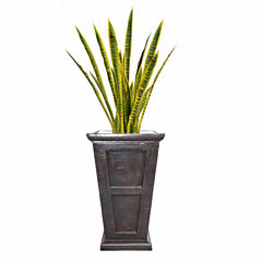 54 Inch Tall Snake Plant In Traditional Planter