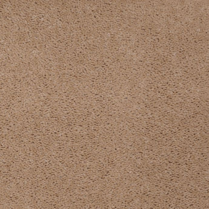 Carpet AcceleratorPlus 1I88-824 DriedPeat