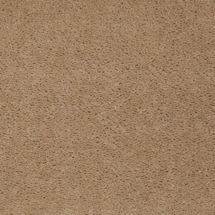 Carpet AcceleratorPlus 1I88-851 OliveBranch