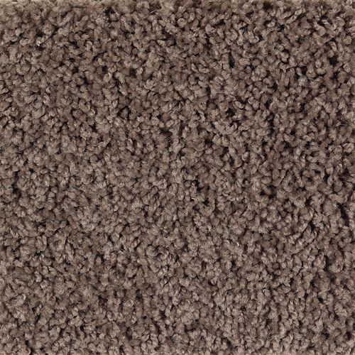Carpet BrightOpportunity 2H89-543 Thoroughbred
