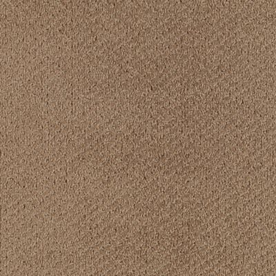 Softique Scotch Brown