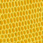 Yellow Gator 634