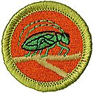 Insect Study Merit Badge Emblem