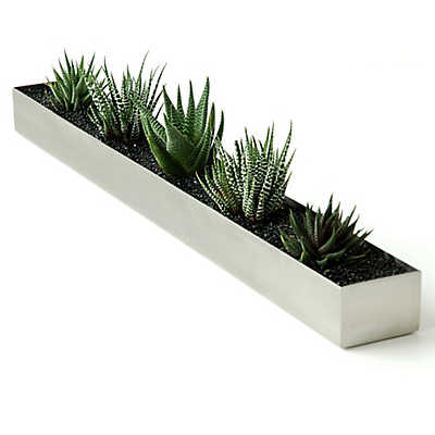 Picture of Gus Houseplant Trough