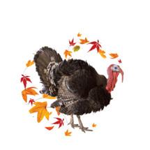 Turkey Emblem