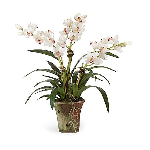 Diane James Cymbidium White Orchid