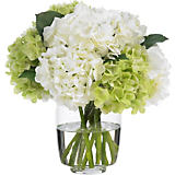 Diane James Green & White Hydrangea Arrangement