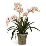 Diane James Pink Cymbidium Orchid