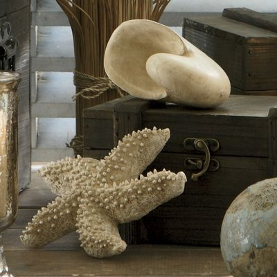 Starfish And Seashell