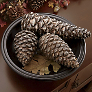 Set Of 3 Taran Pinecones