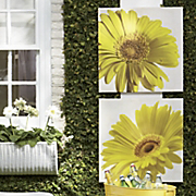 Daisy Canvas Prints