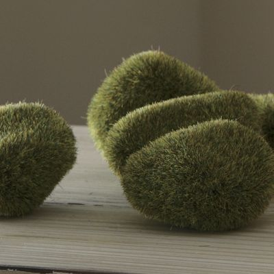 Decorative Moss Forms