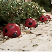 Set Of 4 Solar Ladybugs 1