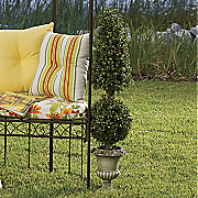 Lighted Boxwood Topiary