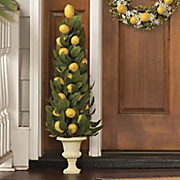 lemon topiary
