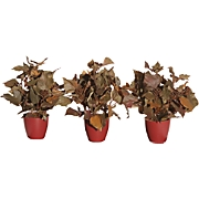 Set Of Three Faux French Ivy Plants