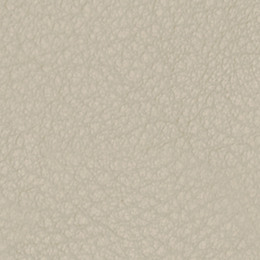 Livia fawn