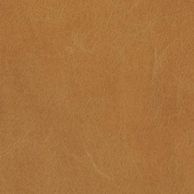 Flagstaff camel