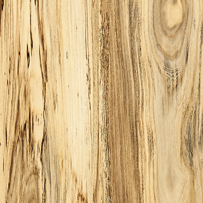 Spalted sugarberry