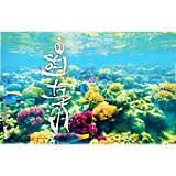 Salt Life® - Coral Reef