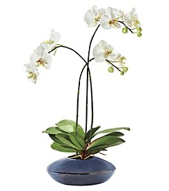 Allstate Floral White Orchid Plant with Ceramic Pot