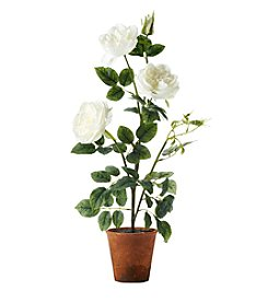 Living Quarters Flower Shop White Rose Bush In Pot