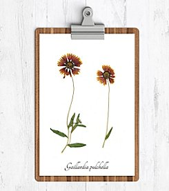 Ecobota Indian Blanket Botanical Print