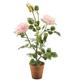 Living Quarters Flower Shop Pink Rose Bush In Pot