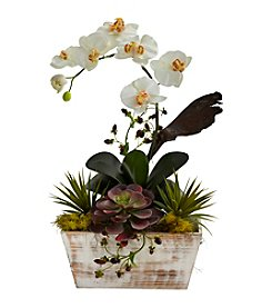 Nearly Natural® Orchid and Succulent Garden with White Wash Planter