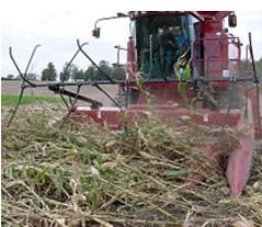 Combine attachments, such as corn reels, may aid in harvesting downed corn.