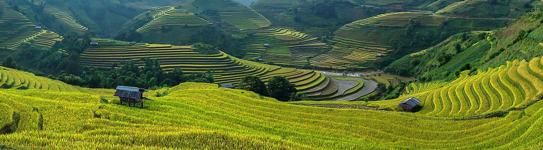 Boer in gewasveld kijkend naar de horizon