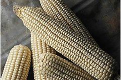 Food grade corn cobs