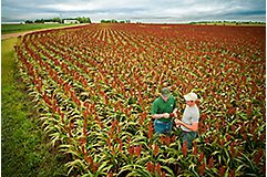 Rep and farmer in sorghum field